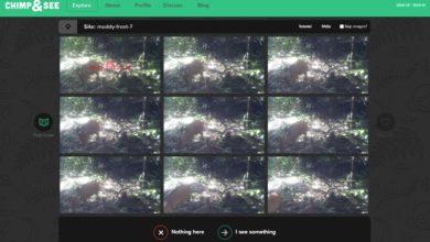 Bild von Tipp: Nichts zu tun? Dann sucht doch im Internet nach Schimpansen!