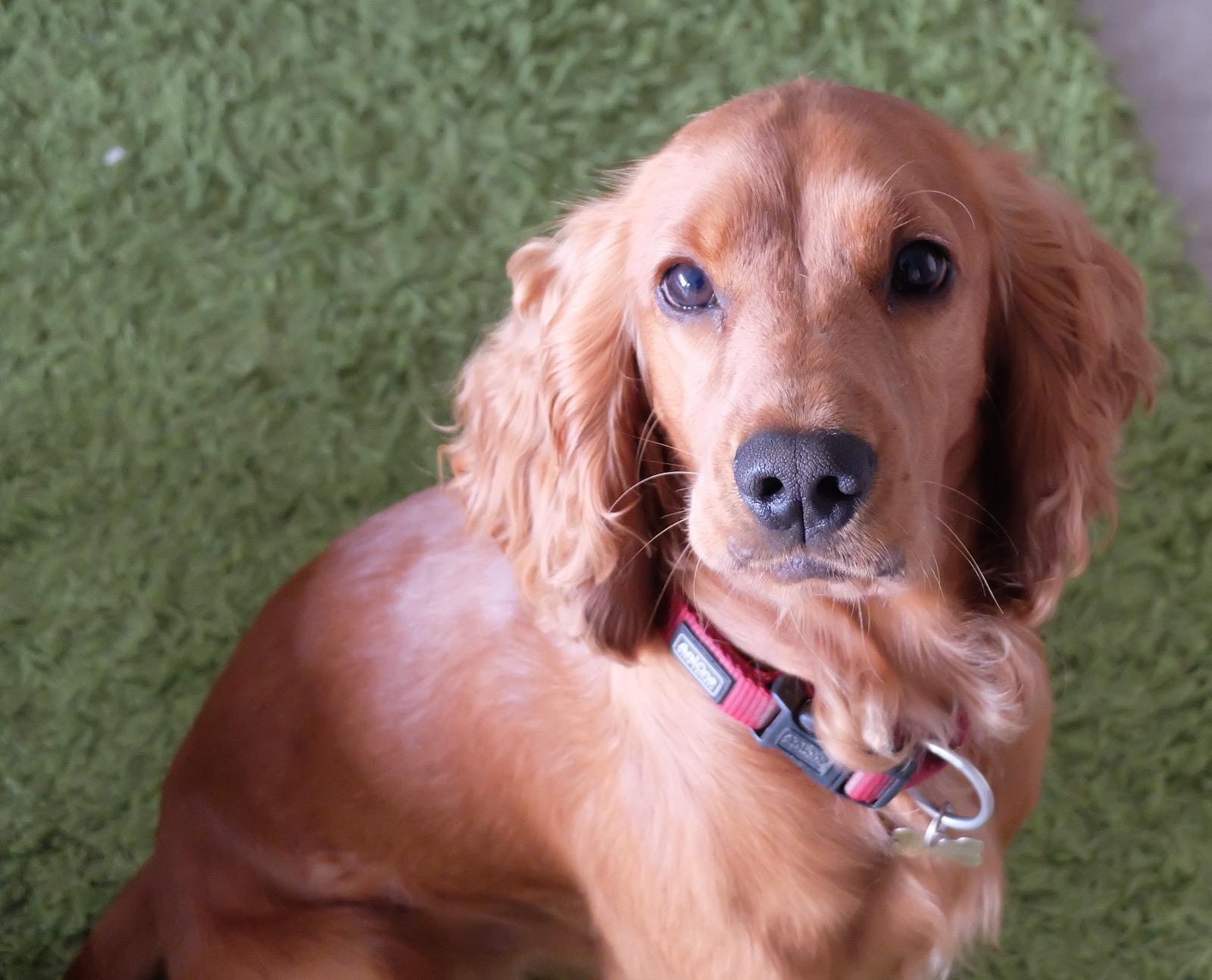 Hunde-Starfoto_Barney