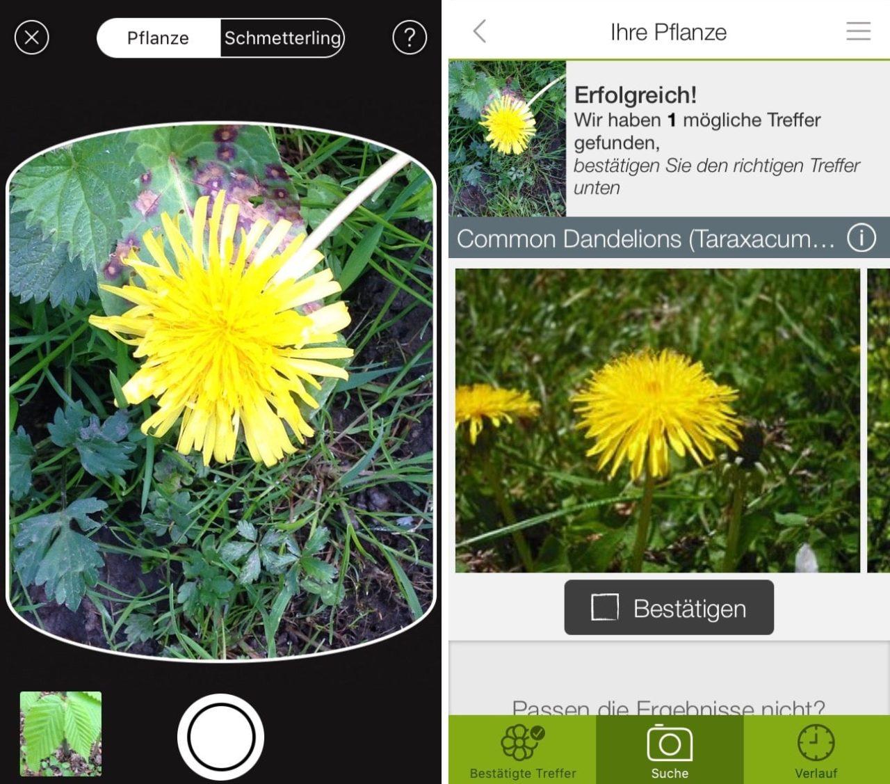 Blumen Erkennen App : pflanzen und blumen mit dem iphone bestimmen per app ~ A.2002-acura-tl-radio.info Haus und Dekorationen