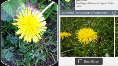 Bild von Pflanzen und Schmetterlinge per iPhone-App bestimmen