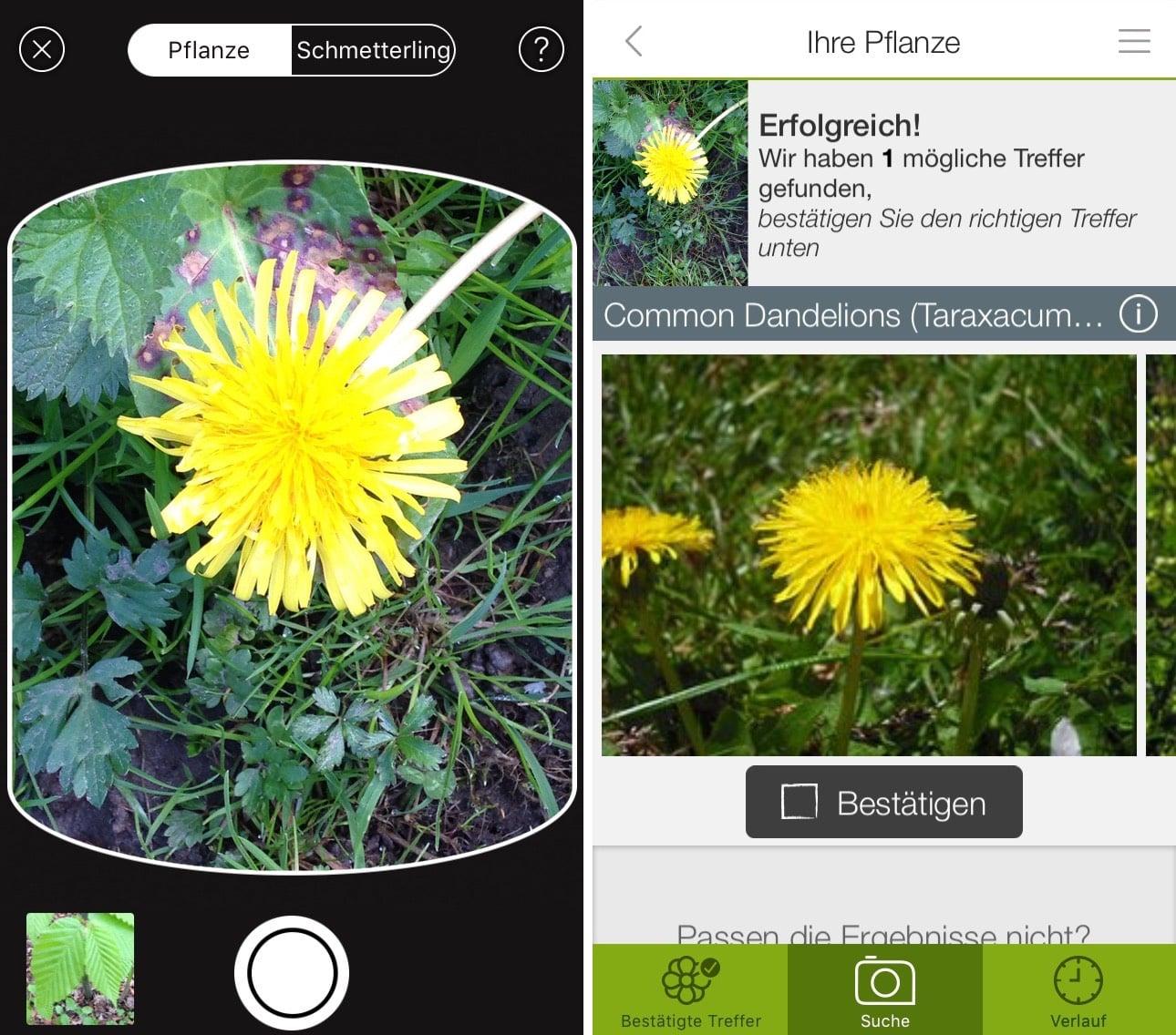 pflanzen und blumen mit dem iphone bestimmen per app
