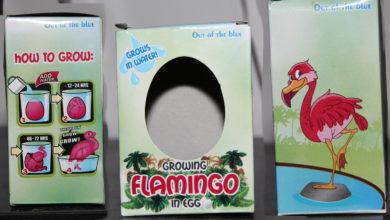 Bild von Flamingo schlüpft aus dem Ei – und wächst und wächst und wächst …