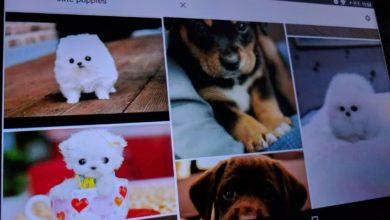 Bild von Google-Bildersuche unter Android komfortabler nutzen