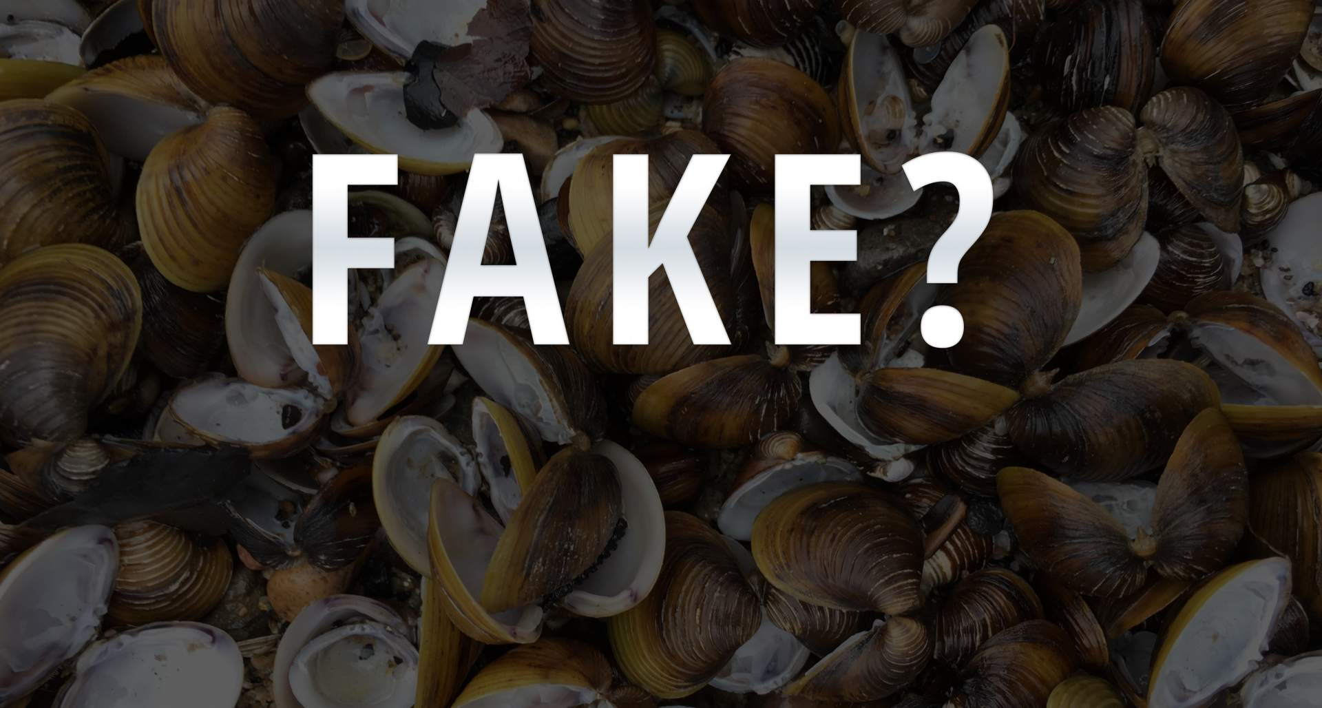 Fake-Bilder