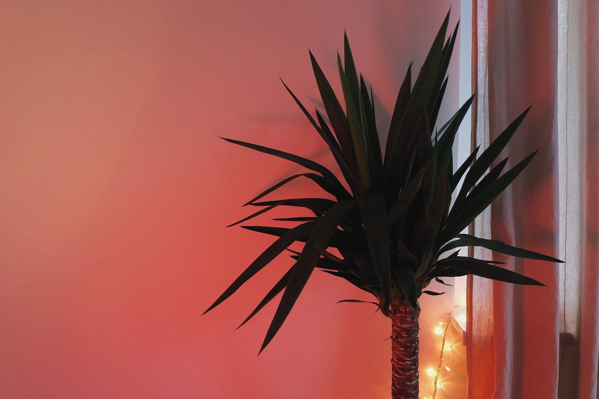 Zimmerpflanzen sind WLAN-Killer. (Bild: Pixabay)