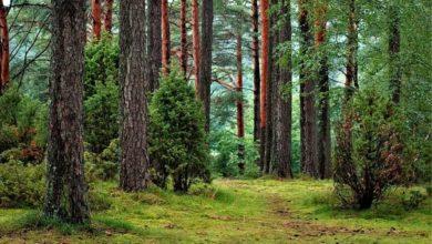 Bild von Off-Topic: Heute schäme ich mich Deutscher zu sein – Moral im Wald