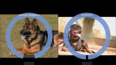 Bild von Android: Hunderasse per Smartphone bestimmen