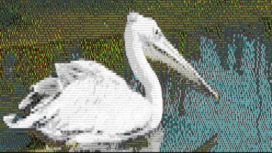Bild von Anleitung: Terminal-Ausgabe mit Farben und ASCII-Art aufhübschen