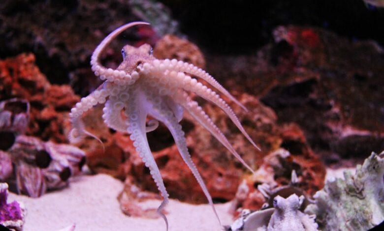 Dies ist ein kleiner Octopus. Weil man Artikel über Google damit bebildert. (Foto: Sharon Ang/Pixabay)