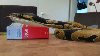 Bild von Google-Suche: Tiere in 3D in der eigenen Wohnung